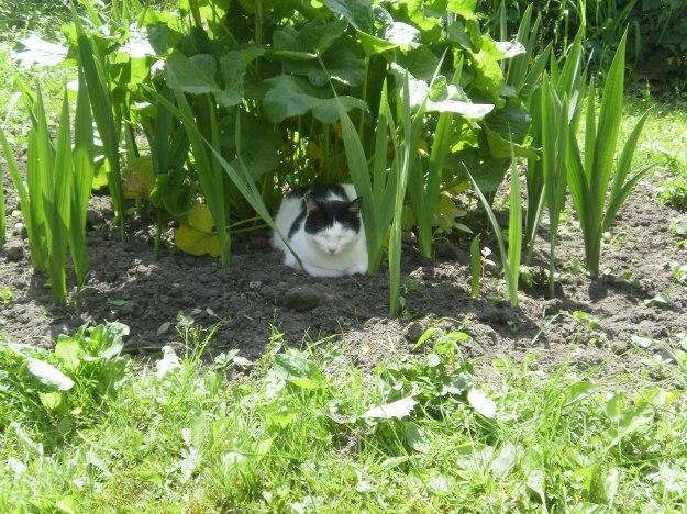 summer 2012 in the garden